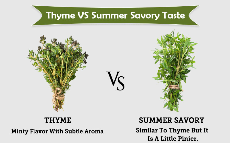 thyme spring vs Summer savory taste image