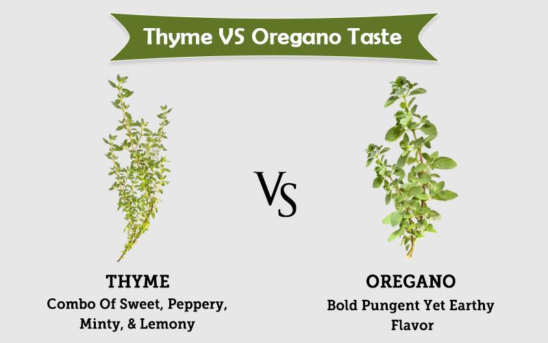 thyme spring vs oregano taste image
