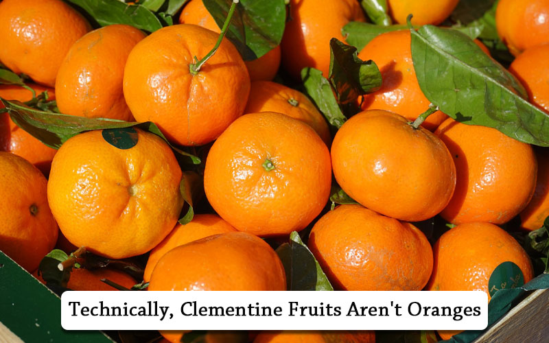 what is Clementine Orange
