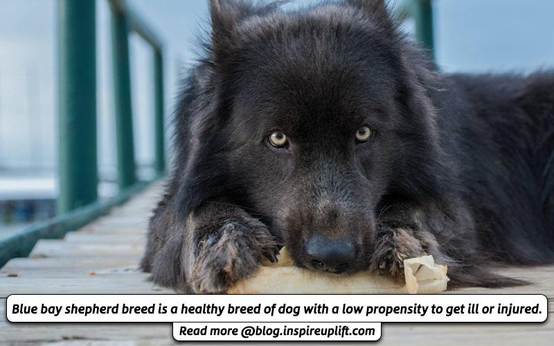 Blue Bay Shepherd Health