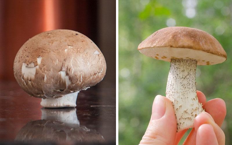 Chestnut mushroom identification
