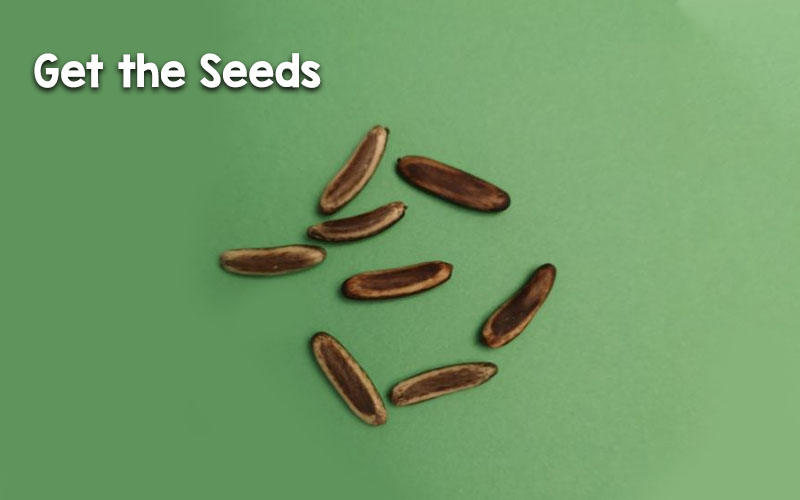 Get the Seeds