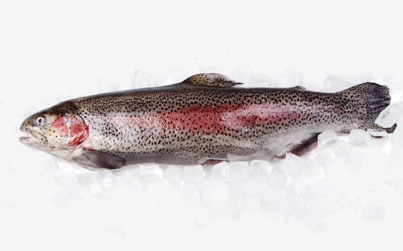Raw Salmon Health Risks