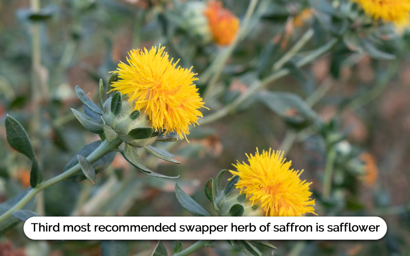 Saffron Substitute Safflower