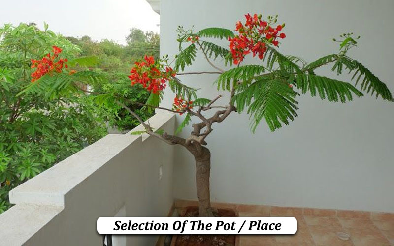 Selection Of The Pot