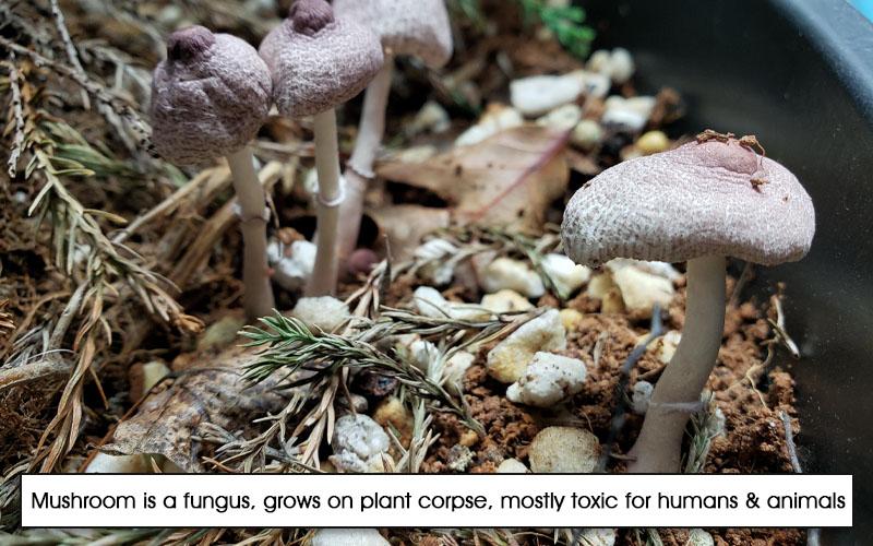 Toxic Mushroom identification