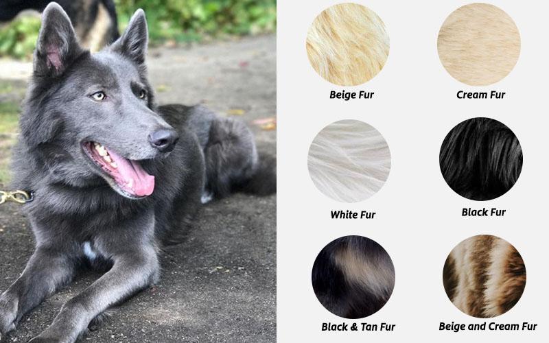 blue bay German shepherd colors
