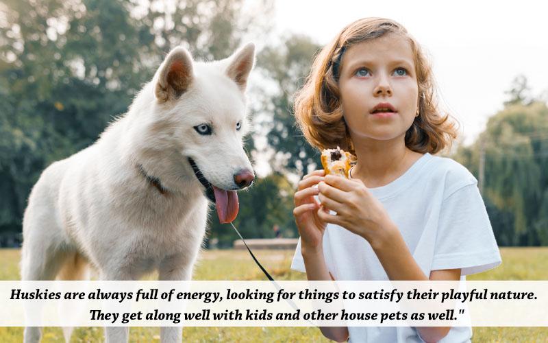 white husky for kids