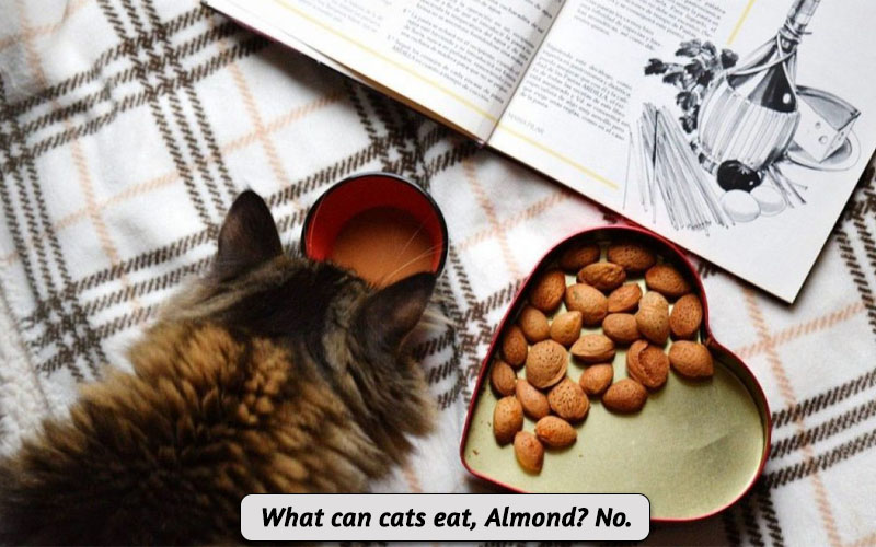 Can Cats Eat Almond
