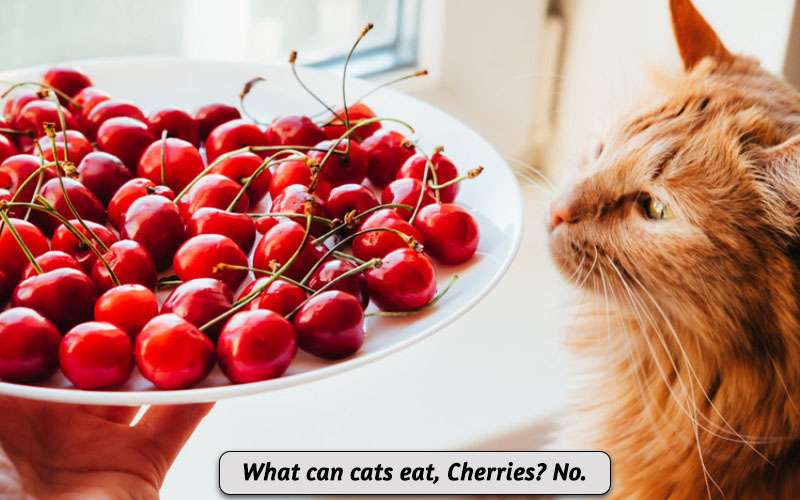 Can Cats Eat Cherries