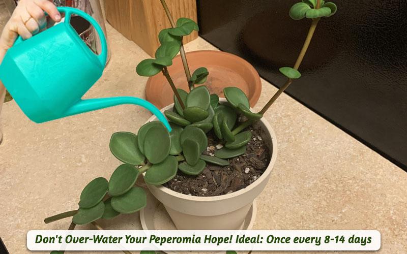 Hope Plant Watering