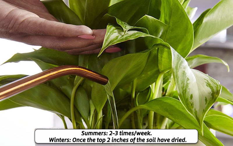 Watering is different for winters & summers