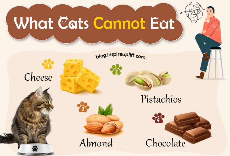 What can cats not eat