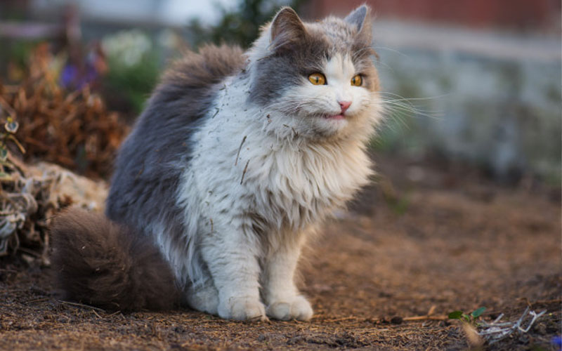 signs your cat is dying from cancer