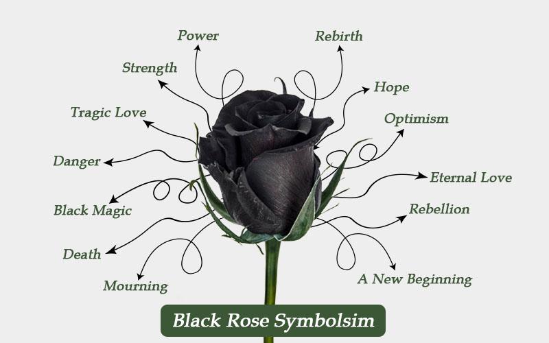 Black Rose Symbolism