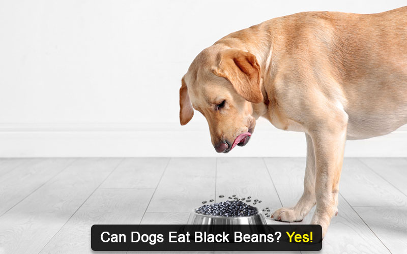 can dogs eat black beans
