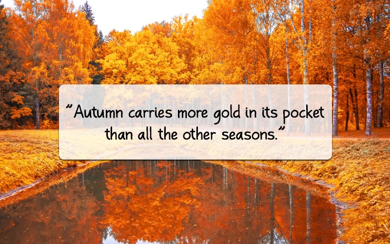 The Beauty Of November Quotes And Sayings