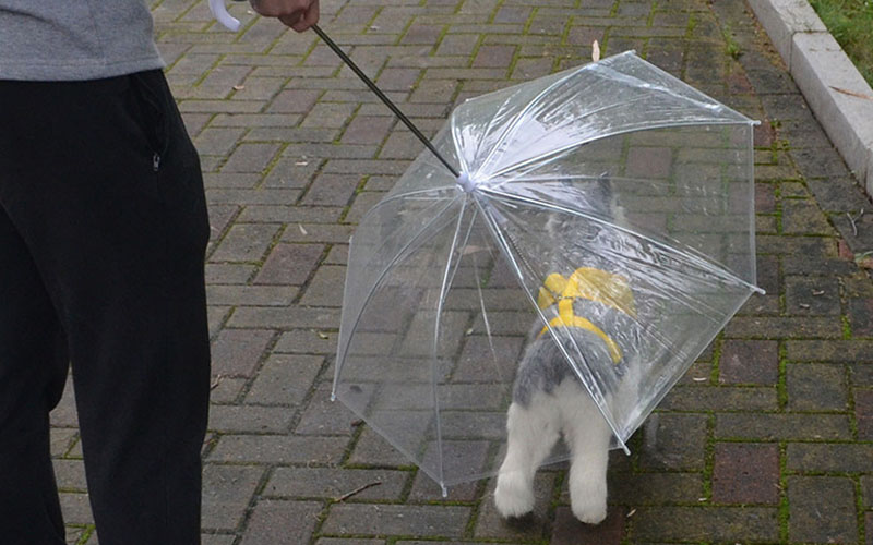 Rainproof Umbrella Dog Leash For Small Dogs