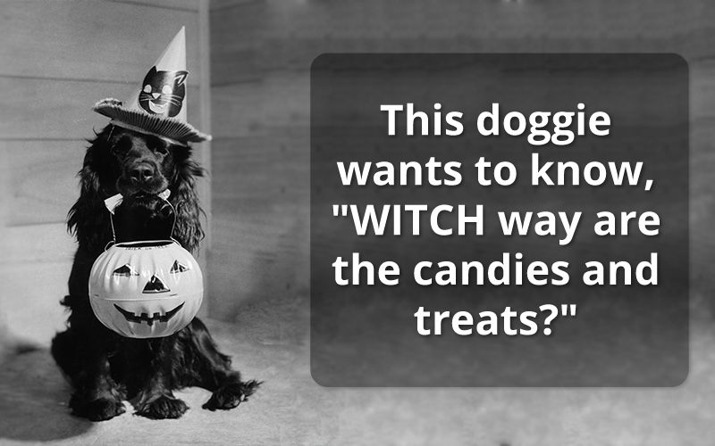 Halloween-Witch-Greetings